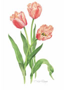 Tulips Greeting Card TLP/06-6
