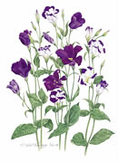 Lysianthus Greeting Card L/08-4
