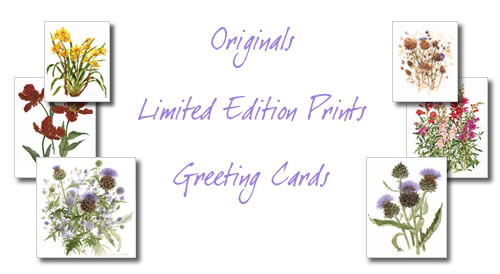 Shop for limited edition prints, greeting cards and original painting.